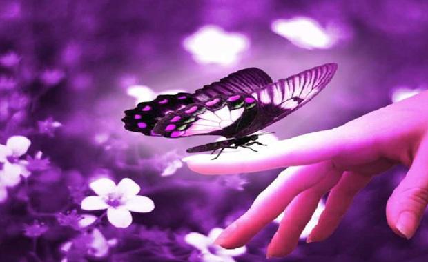 Mariposas de colores con movimiento - Imagui