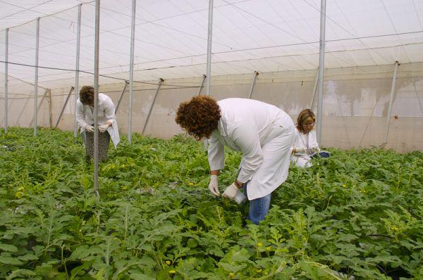 El 90% de los jóvenes agricultores de Almería queda fuera de las ayudas de la Junta