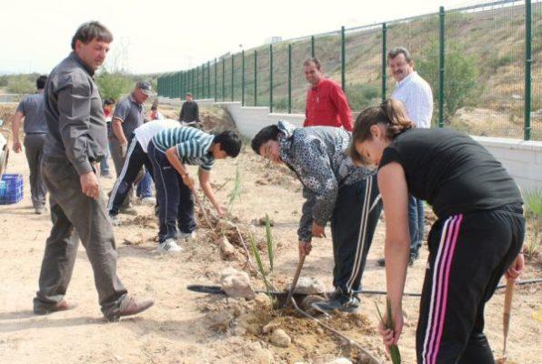 Plantación-palmitos-Pulpí