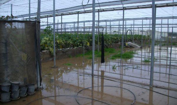 Unas 57 hectáreas inundadas de la Balsa del Sapo, exentas de IBI rústico