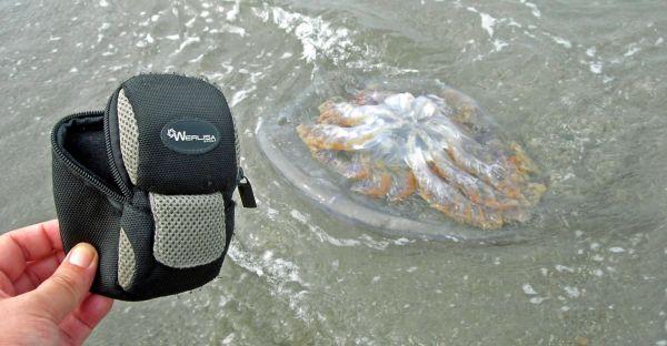 medusa en Cabo de Gata