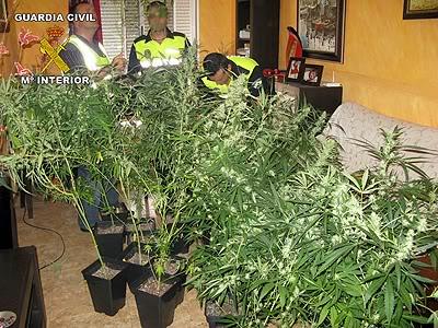 marihuana_nijar