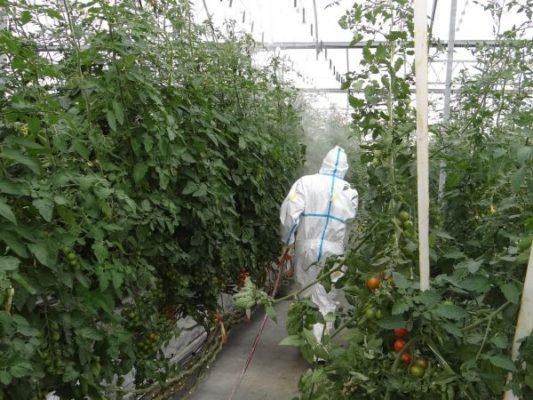Agricultor aplicando fitosanitarios