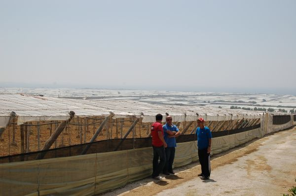 Los agricultores de Almería perderán 13,6 millones de euros con la distribución de la PAC