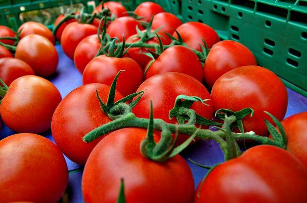 tomates Almería