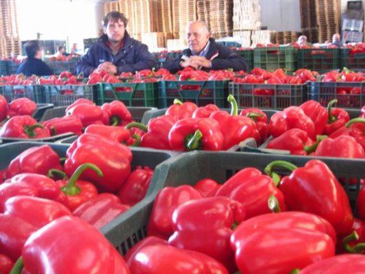 Estados Unidos autoriza la reapertura del mercado de pimientos españoles