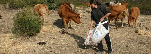 Ganadera alimentando a las vacas