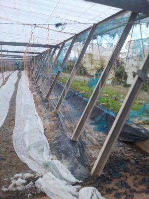 banda de invernadero quemada por actos vandalicos