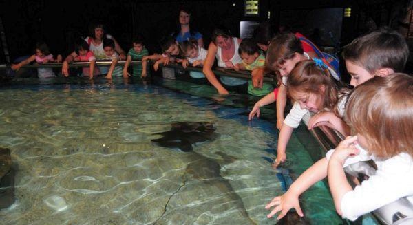 Aquarium roquetas archives almeria 360 Aquarium en roquetas de mar