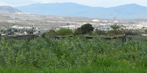 Almería y la venta directa del agricultor al consumidor