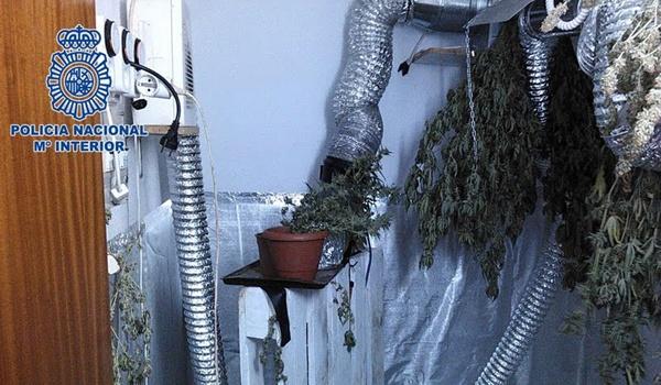 Policía Nacional interviene 28 plantes y varios gramos de cocaína y heroina en Almería