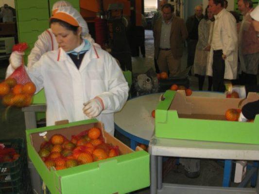 CITRICOS DEL ANDARAX (4-12-09) 022