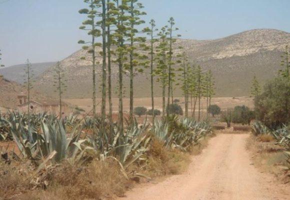 Almería pitas