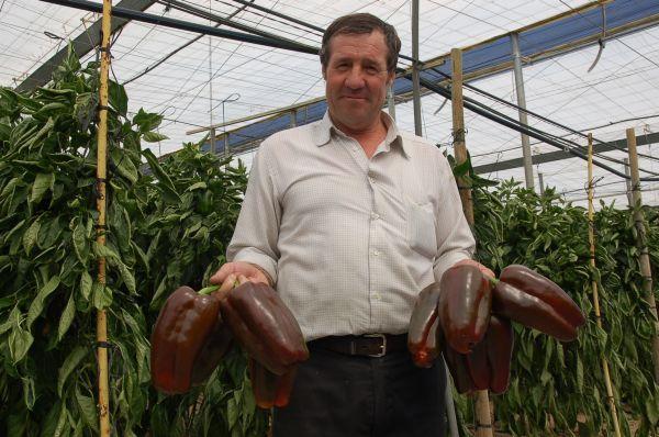 Agricultor con pimientos