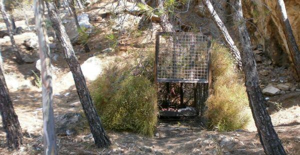 Instalan cámaras junto a la jaula para capturar con vida a la pantera avistada en Castala