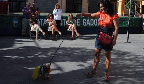 Chip, el perrito hawayano de Asen Camacho¡