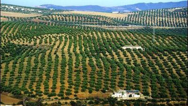 La-agricultura-ecológica-andaluza-proporciona-ya-20.000-empleos (1)