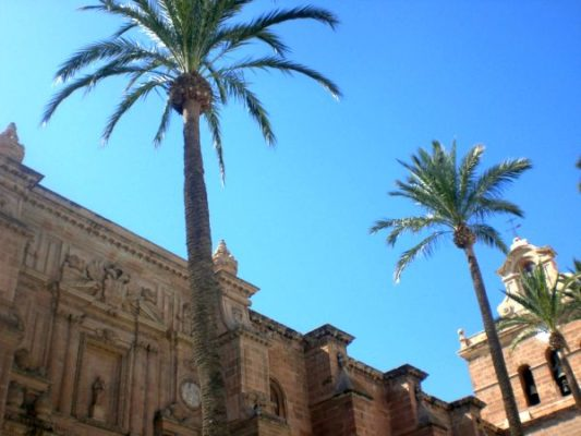 Palmera podada Plaza Catedral