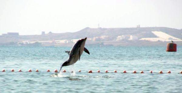 Delfín Marcos