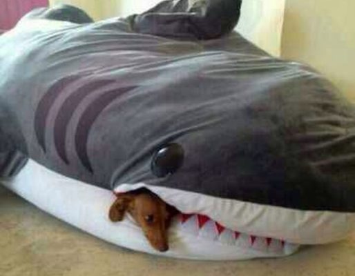 tiburón y el perrito