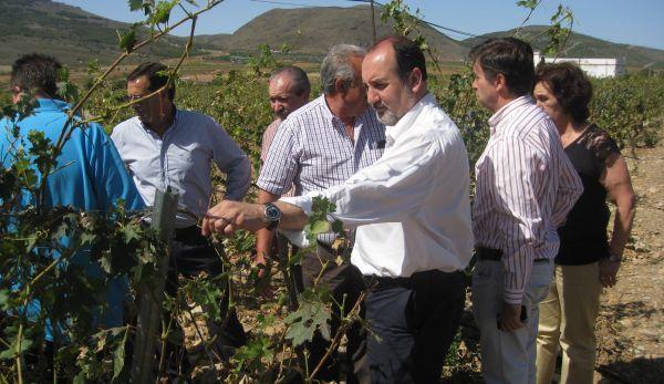 José Manuel Ortiz, el alcalde de Laujar de Andarax, bodegueros y viticultores de la zona, durante la visita a una de las viñas afectadas por el granizo.