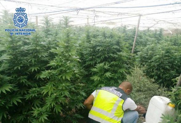 Marihuana Policia Nacional