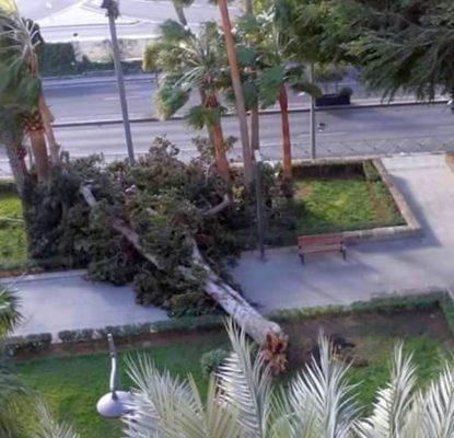 árbol caído por el viento