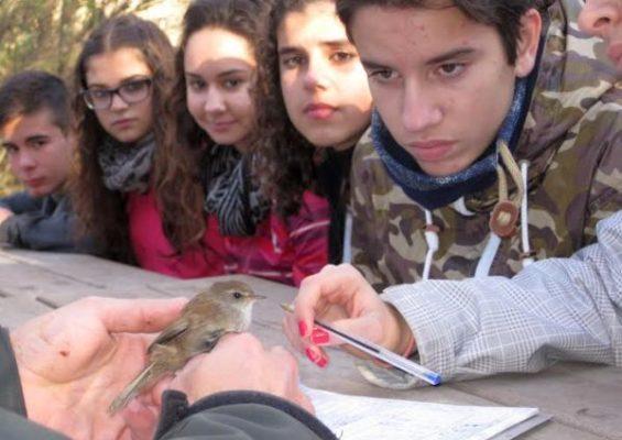 Anillamiento de aves en la estación ornitológica 'Lorenzo García' de la Albufera de Adra