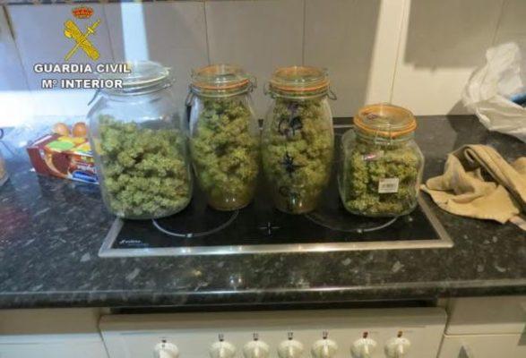 cogollos marihuana