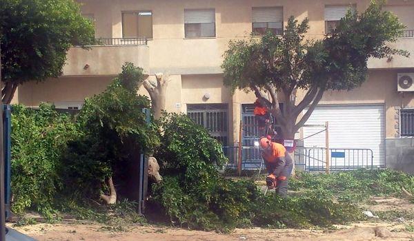 Tala de árboles Zara Todorova