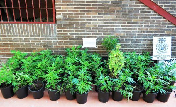 Plantas de marihuana descubiertas en una vivienda de Almería
