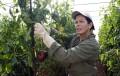 Tres seminarios en octubre para ayudar a la mujer a acceder al sector agrícola