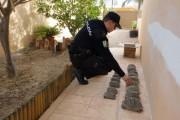 A disposición judicial por tener 16 tortugas mora en su casa en Turre