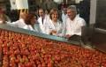 Holanda detecta una partida de tomates con restos de Etefón