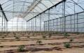 Las ayudas para la modernización de invernaderos se incrementan a 109 millones de euros