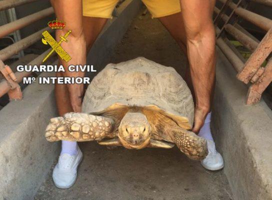 tortuga-mora
