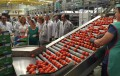 Almería aumenta un 7,9% las exportaciones de hortalizas