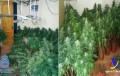 Seis detenidos en un golpe policial contra el tráfico de hachís y el cultivo de marihuana en Almería