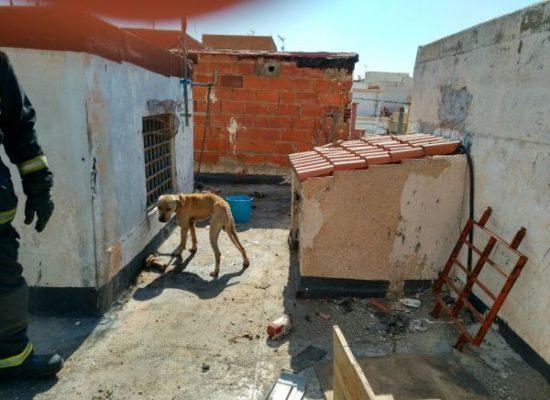 Perro rescatado en Almería