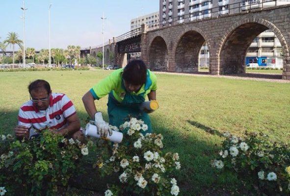 Técnico de Agrobío instalando fauna auxiliar en rosales