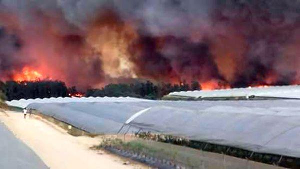invernaderos en Huelva (foto UPA)