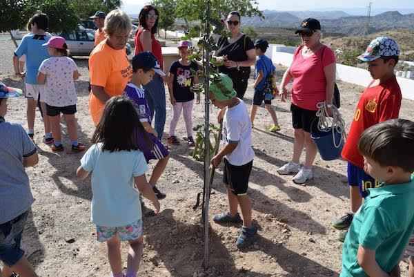 plantación árboles 2