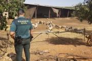 Investigado un vecino de Abla por hurto de ganado en dos explotaciones