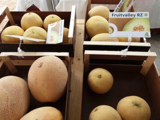 Fruitvalley RZ (galia) - Karpatos RZ galia