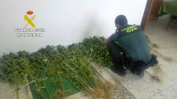 Marihuana Sorbas, Guardia Civil
