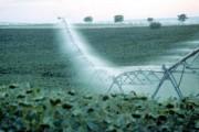 La Big Data, una revolución para la agricultura