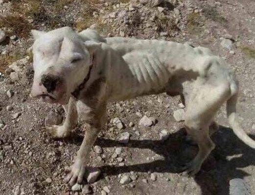 auxilio perrito chirivel (1)