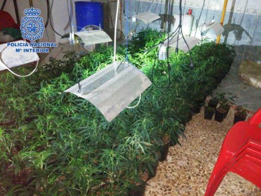marihuana en vivienda