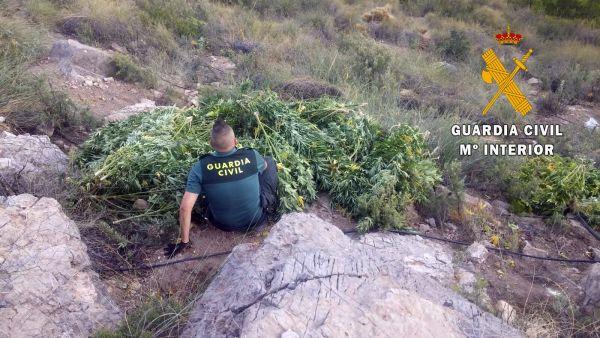 marihuana_roquetas (2)