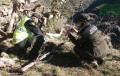 Hallan cuatro cadáveres de jabalí atrapados por lazos en un paraje de Turre